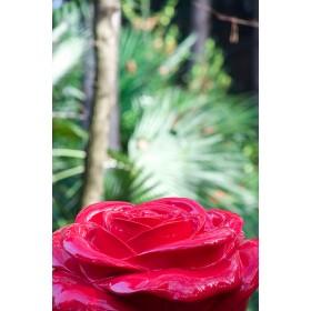 Rose AED_01_V